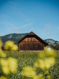 edelweiss-seebacherhof-7